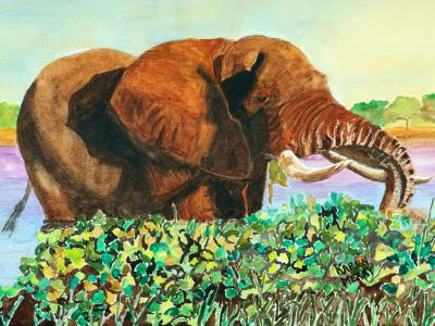 Matriarch African Elephants