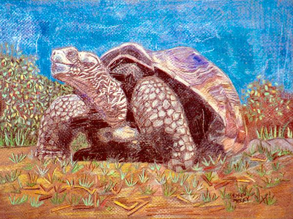 Galapagos Turtle I