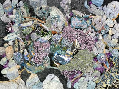 Mussels & Purple Sea Urchins