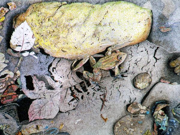 Fern Canyon Frog